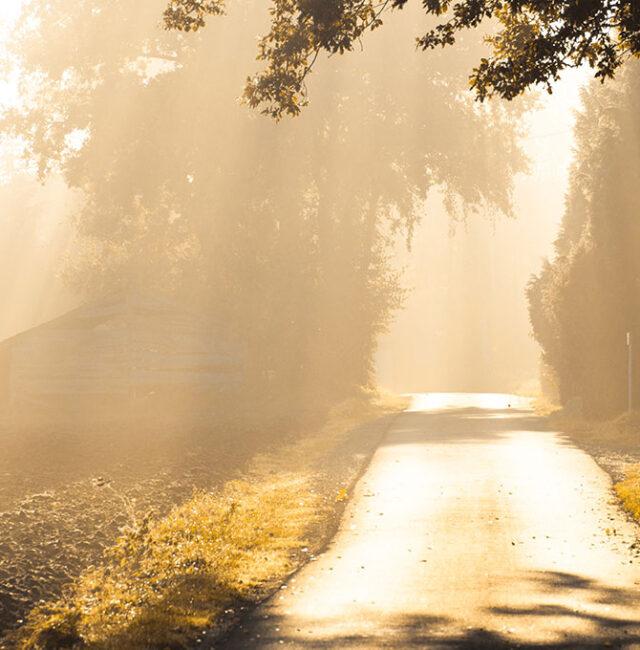 Herbst_Riehenhaar_klein