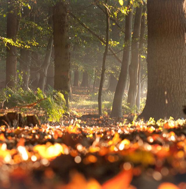 Herbst_Westbevern-0113_klein